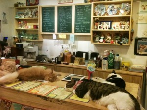 cat café korea